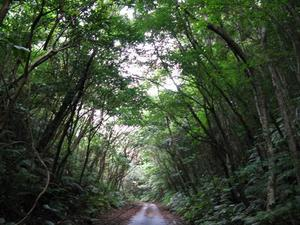 2010yanbarunomori