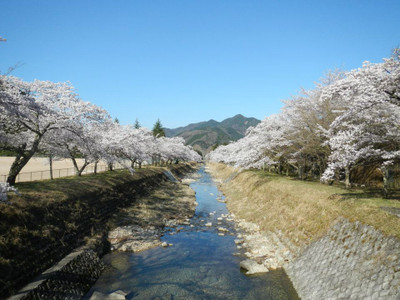 Sakuratanba3